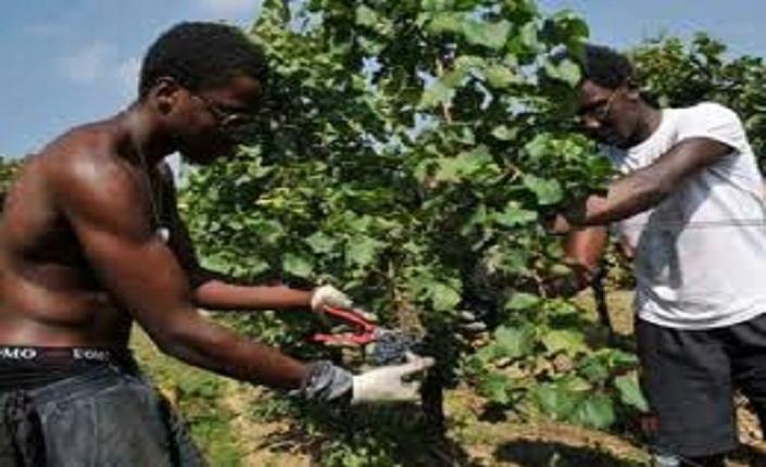 Sfruttare gli immigrati, anche così in Emilia l'agricoltura va