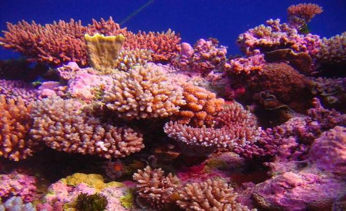 I coralli dei Caraibi stanno morendo. Ma qualcosa si potrebbe fare.