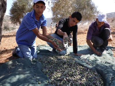 palestina olive bambini