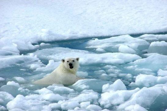 cambio climatico orso nel ghiaccio