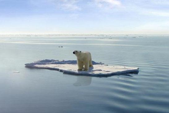 orso ghiaccio