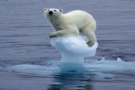 04 orso  su ghiaccio
