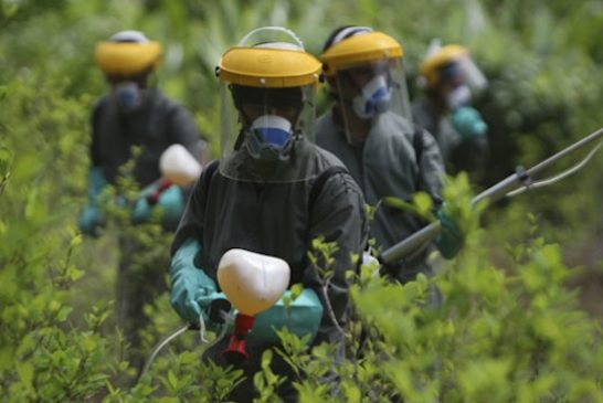 Colombian anti-narcotics police spray herbicide on a coca plantation in La Espriella near Tumaco