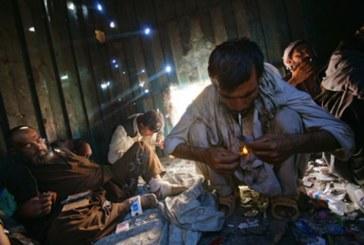 Guerre dimenticate/ Conflitto mondiale afghano per il dio oppio