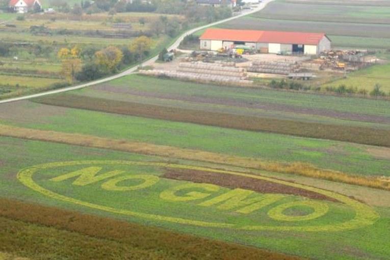 «Gli Ogm uccidono la biodiversità e la sovranità alimentare»