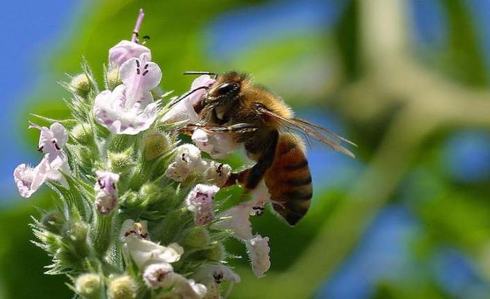 fiore e ape