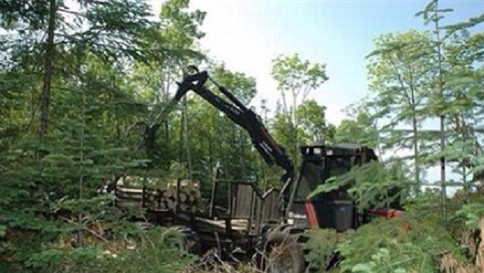 Ebola c'è da quando le multinazionali distruggono le foreste