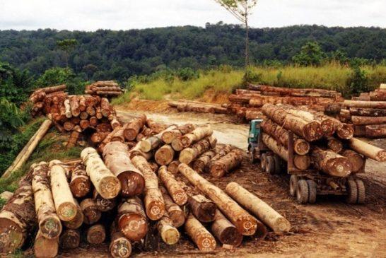 Deforestazione bola 1