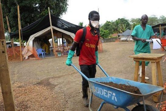Deforestazione ebola 6