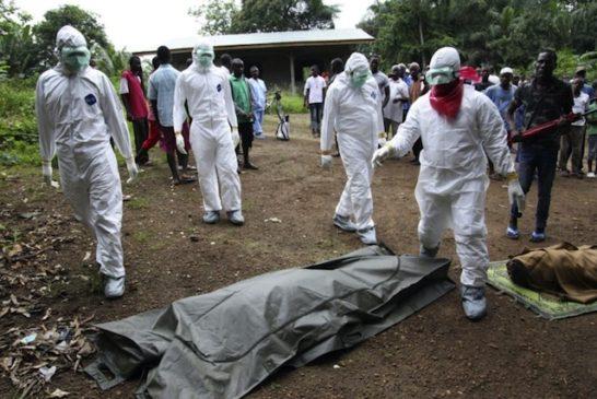 Deforestazione ebola 7
