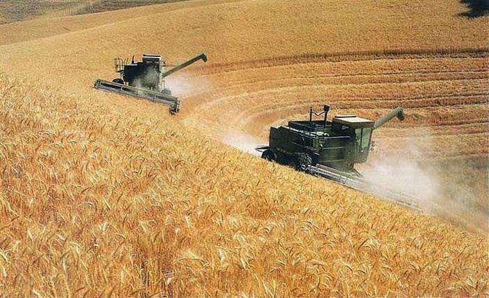 grano in Ucraina