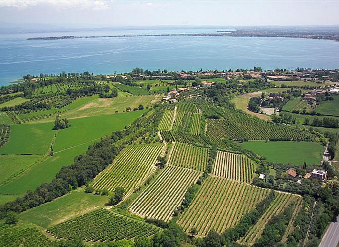 Oltre il 20% di vigne di Lugana sul Lago di Garda andranno perdute grazie alla TAV.