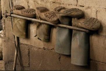 Agricoltura, un bracciante su tre nelle mani dei caporali