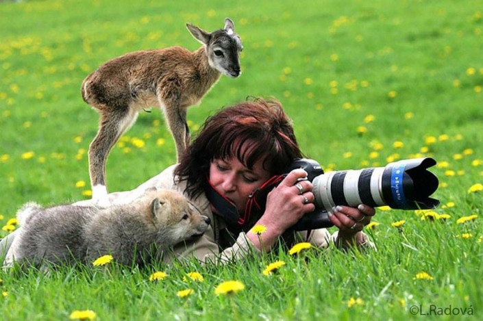 Fotogallery. Metti a fuoco la volpe, la foca, il gufo