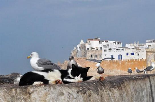 I gatti di Essaouira
