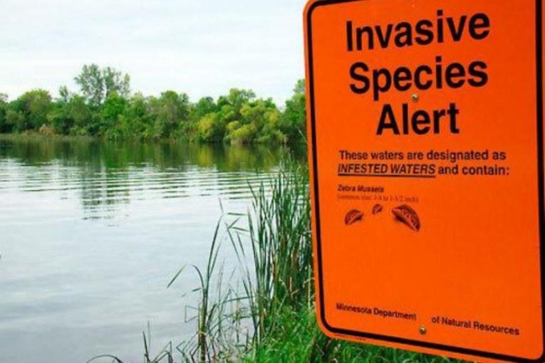 Specie aliene, i veri invasori: nutria, vespa killer, scoiattolo grigio e altri 3mila