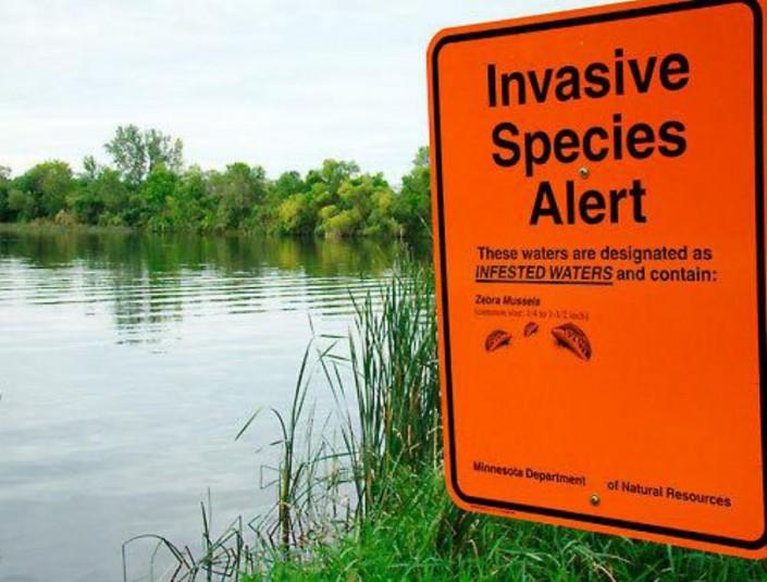 invasive-species-alert