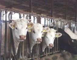 produzione industriale di carne
