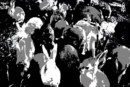 "Racconti d'Estate 7 – Carrington, ""Conigli bianchi"""