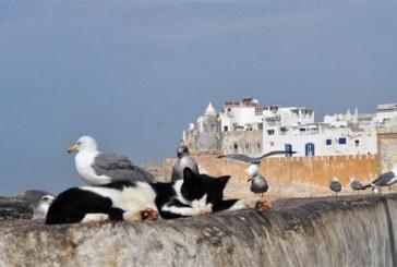 Quei gatti nella città che smonta i pregiudizi