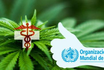 La cannabis non è dannosa, e ora chi glielo dice a Salvini e Fontana?