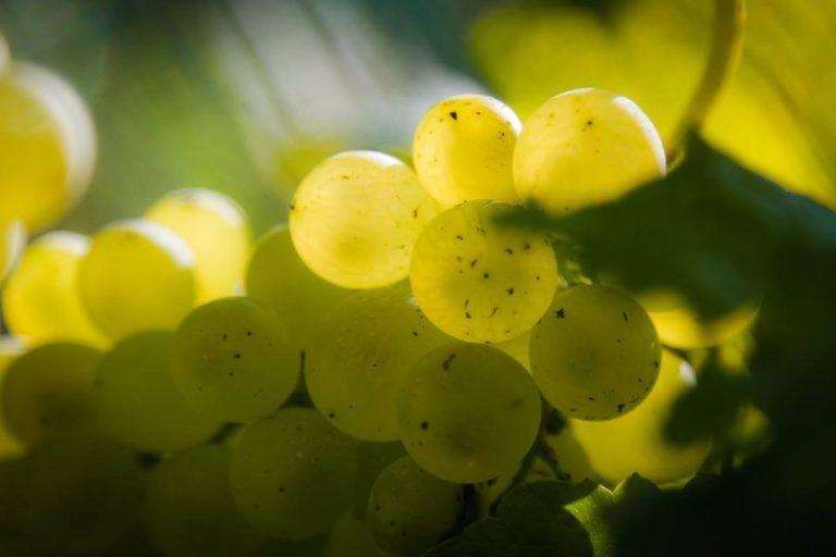 A Genova arriva il Wine Day