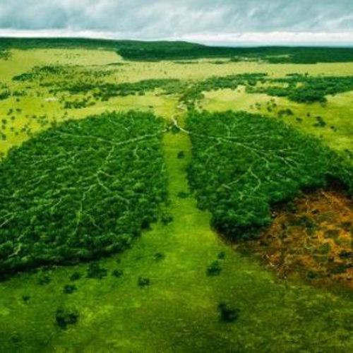 Amazzonia: aumentano deforestazione e violenza contro gli indios