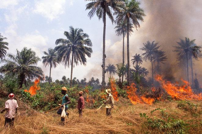 La biodiversità per salvarci dalle prossime pandemie