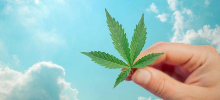 Referendum cannabis, onda verde a quota 100mila in 24 ore